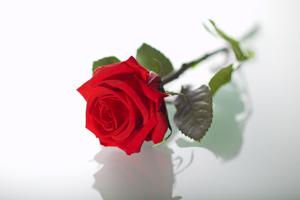 バラ プリザーブドフラワー ローズ 薔薇